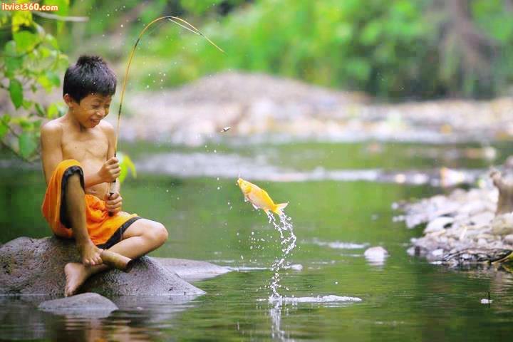 Huấn luyện cá giỏi